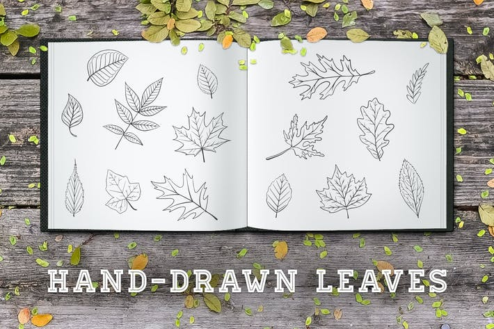 Thumbnail for Hand-Drawn Leaves