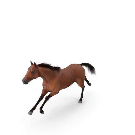Running Bay Horse Fur