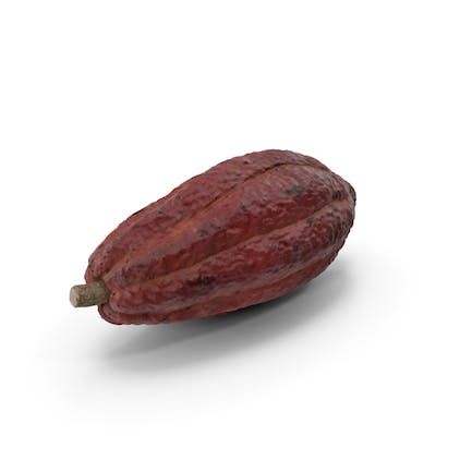 Brown Cocoa Fruit