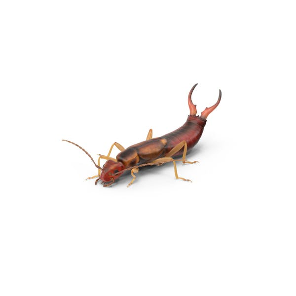 Cover Image for Earwig