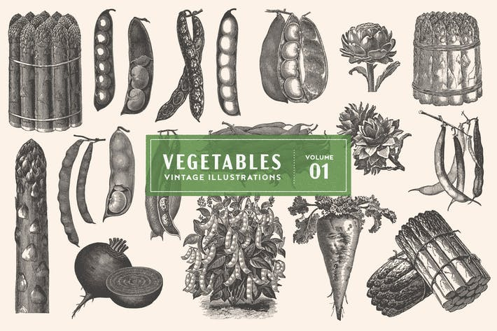 Vintage Vegetable Illustrations Vol. 1