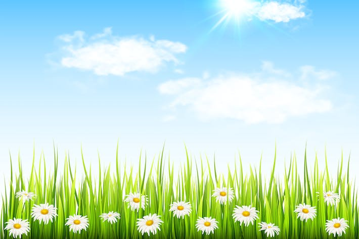 Thumbnail for Daisy Flowers and Green Grass