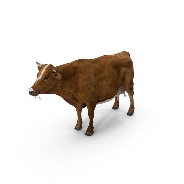 Корова красная