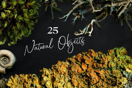 25 Natural Objects