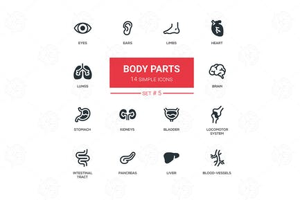 Body parts - modern simple thin line design icons