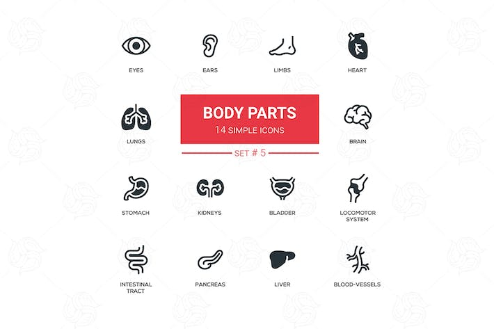 Thumbnail for Body parts - modern simple thin line design icons
