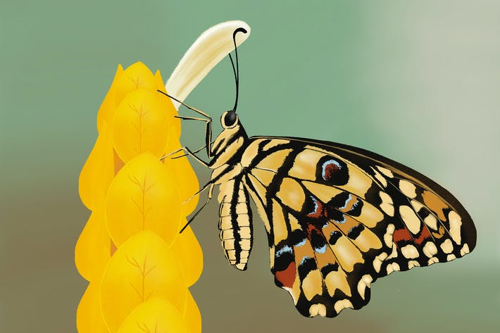 Thumbnail for Illustration - Butterfly on a tree