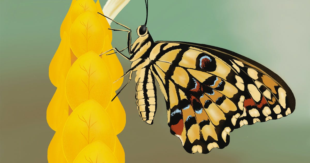 Download Illustration - Butterfly on a tree by Squirrel92