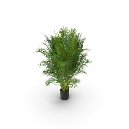 Photorealistic Palm