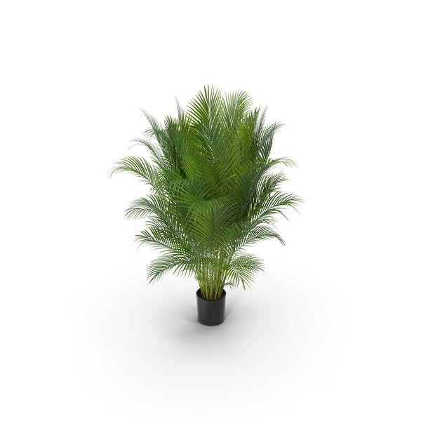 Photorealistic Palm