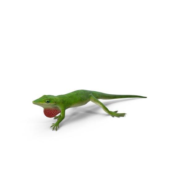 Thumbnail for Carolina Anole Lizard