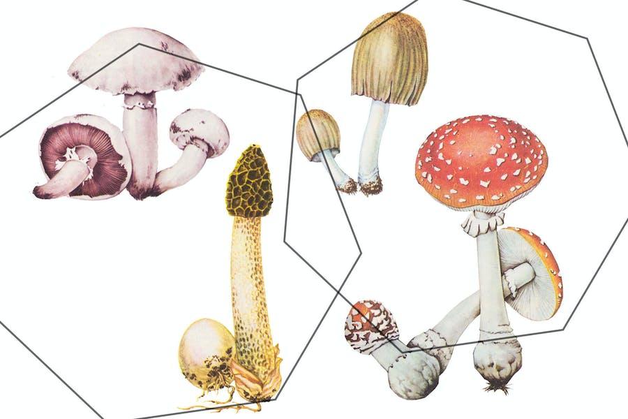 Detalized mushrooms set - retro autumn set