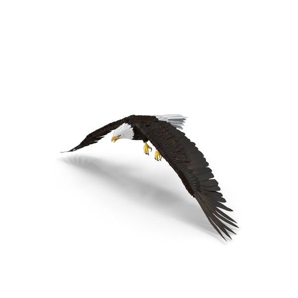 Bald Eagle Flapping