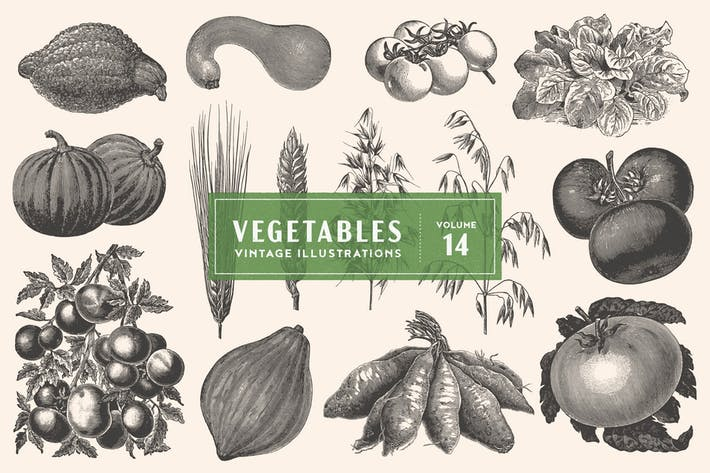 Thumbnail for Vintage Vegetable Illustrations Vol. 14