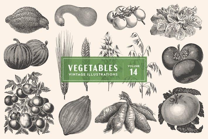 Thumbnail for Vintage Vegetable Illustrations Vol. 14