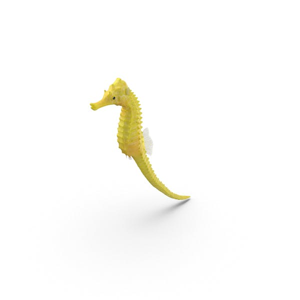 Thumbnail for Yellow Seahorse with Tail Extended