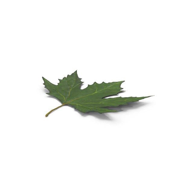 Cover Image for Maple Leaf