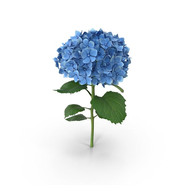 Cover Image for Blue Hydrangea