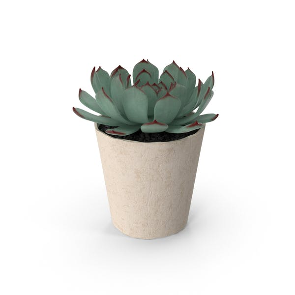 Cover Image for Succulent