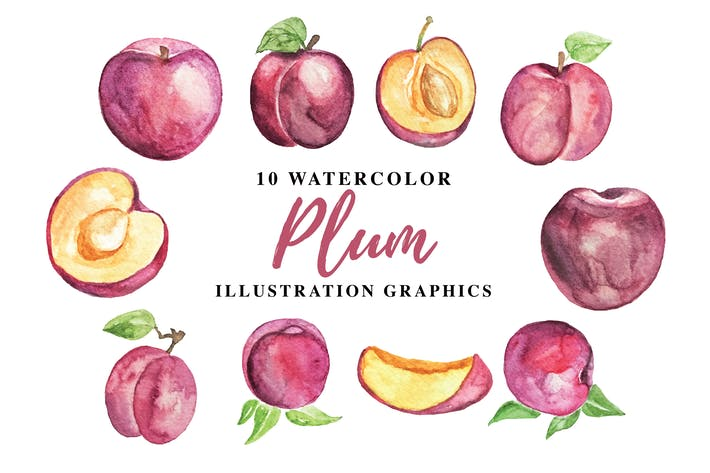 Thumbnail for 10 Watercolor Plum Illustration Graphics
