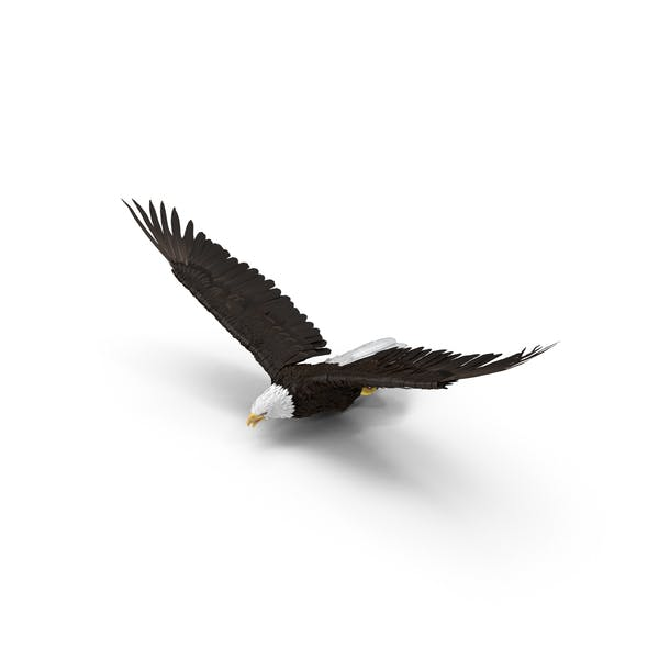 Cover Image for Bald Eagle Flying