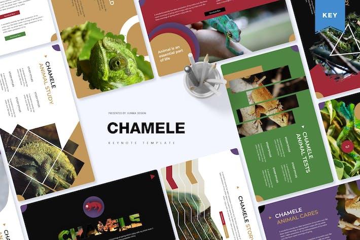 Thumbnail for Chamele | Keynote Template