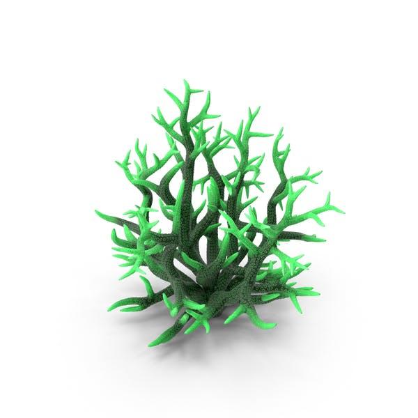 Сoral Green