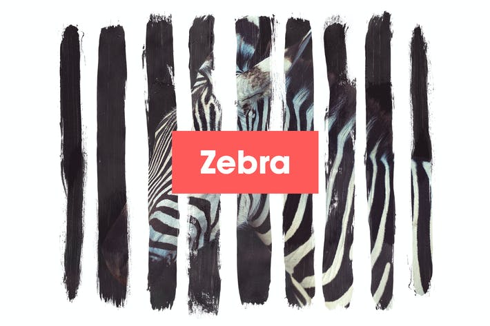 Thumbnail for Zebra