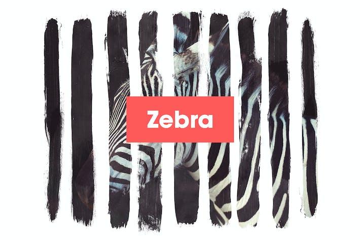 Cover Image For Zebra