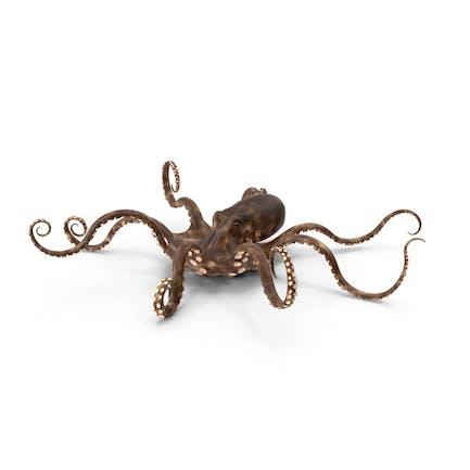 Octopus sitzend