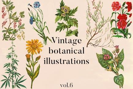 Vintage Botanical Illustrations Vol. 6