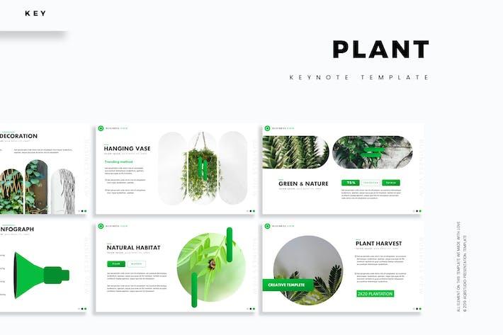 Thumbnail for Plant - Шаблон Keynote