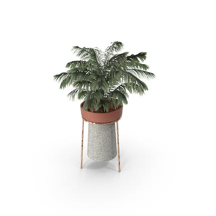 Plant With Tripod Stand