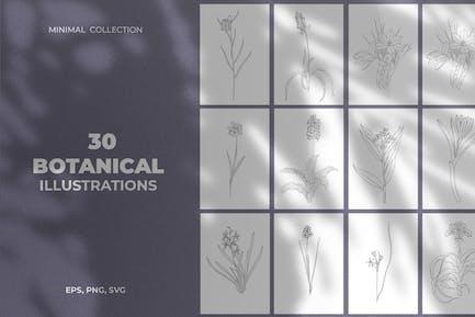 Ilustraciones botánicas mínimas