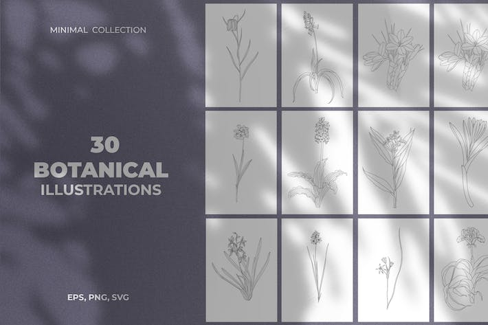 Thumbnail for Minimale botanische Illustrationen