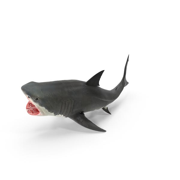 Cover Image for Great White Shark
