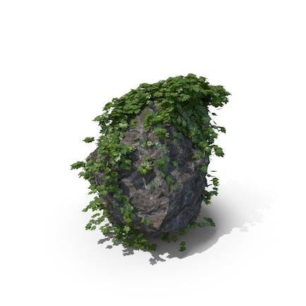 Efeu Bedeckter Felsen