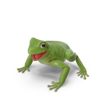 Australischer grüner Baumfrosch
