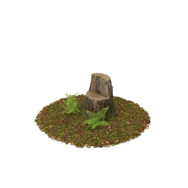 Thumbnail for Stump with Ferns