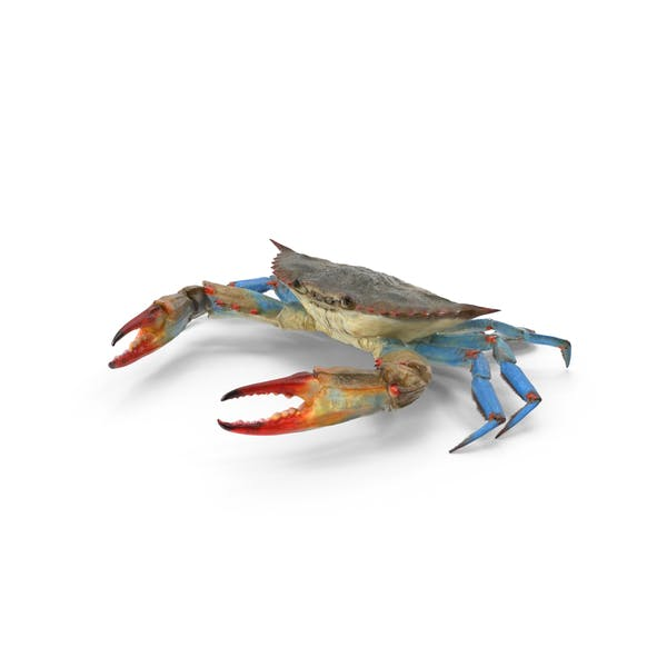 Thumbnail for Blue Crab