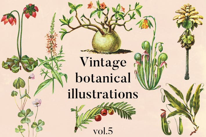 Thumbnail for Vintage botanische Illustrationen Vol.5