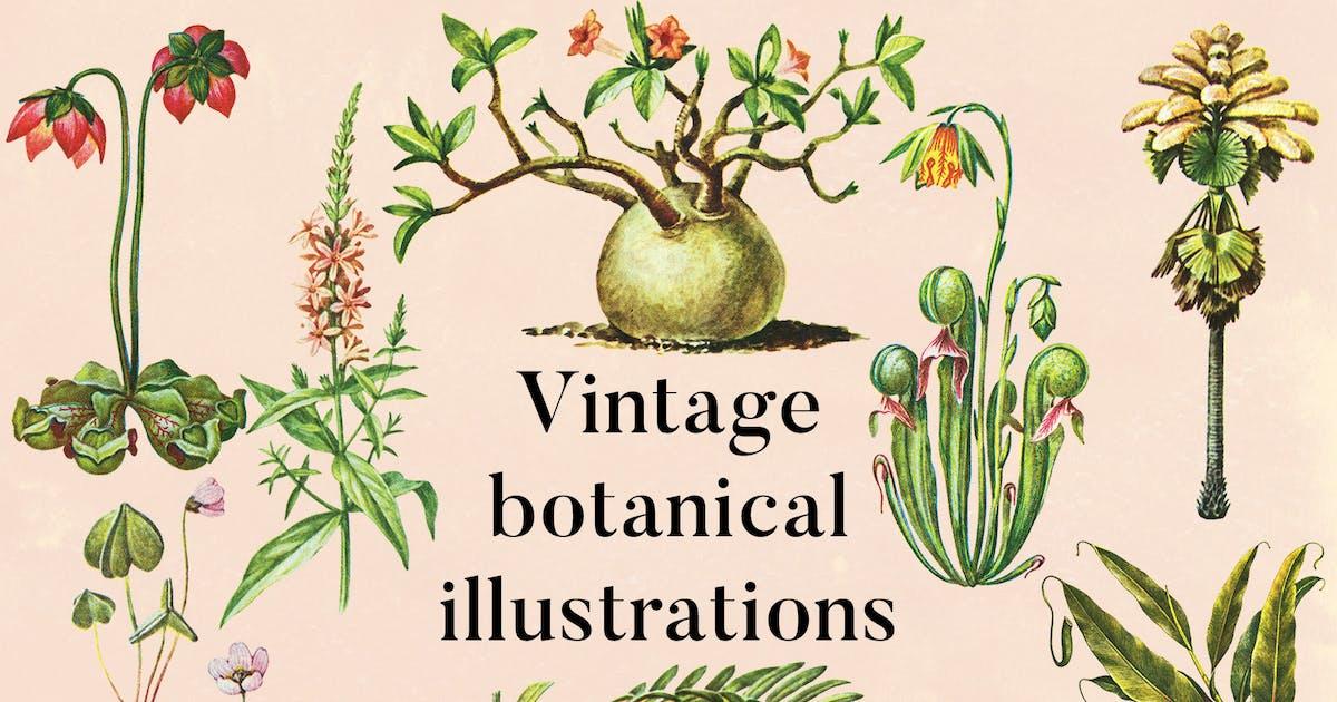 Download Vintage Botanical Illustrations Vol.5 by FreezeronMedia