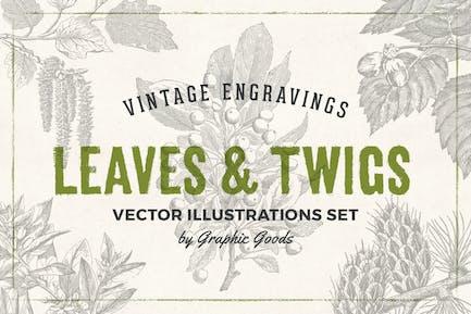 Leaves & Twigs – Vintage Engraving Illustrations