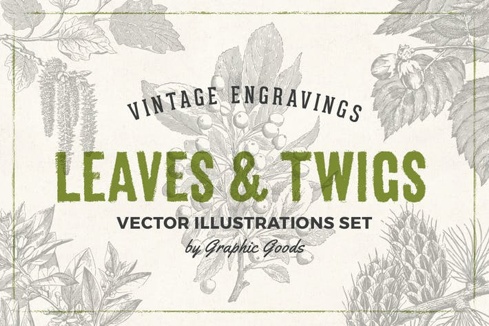 Thumbnail for Leaves & Twigs – Vintage Engraving Illustrations