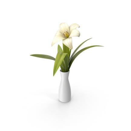 Blume in einer Vase