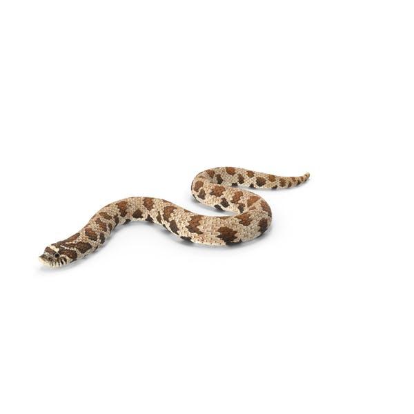 Krabbelnde braune Hognose Snake