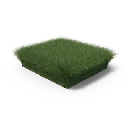 Grasform