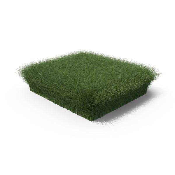 Thumbnail for Grass Shape