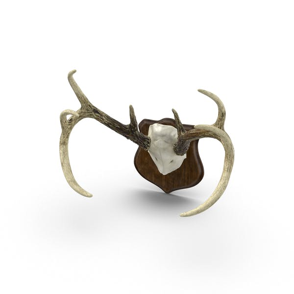 Cover Image for Mounted Antlers