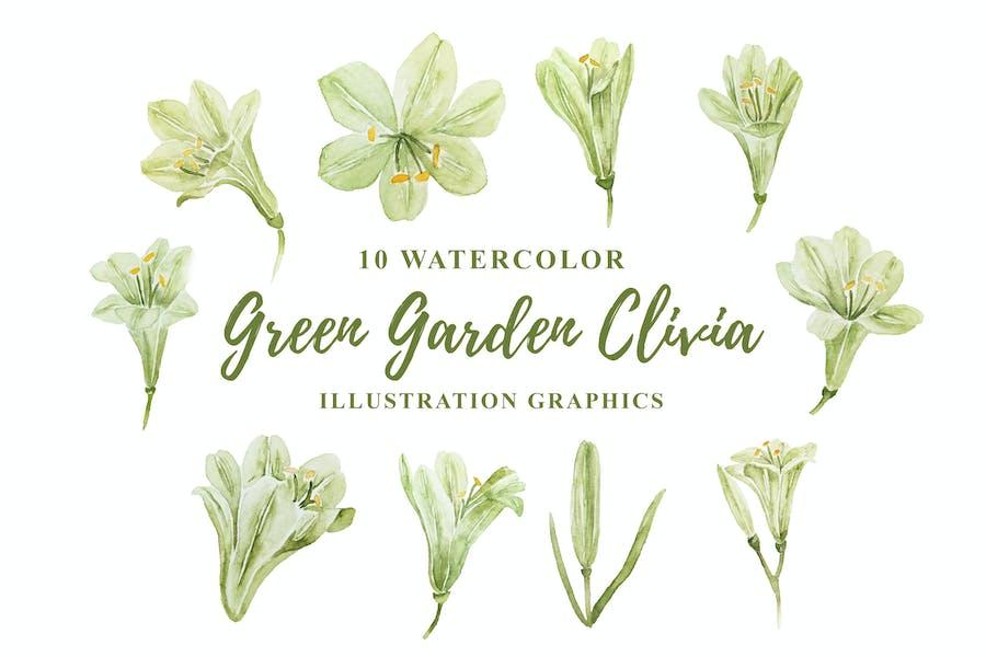 10 Watercolor Green Garden Clivia Illustration